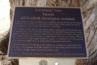 Árbol de Leichhardt
