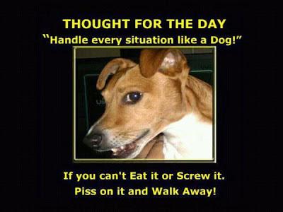 Handle einen Tag wie ein Hund
