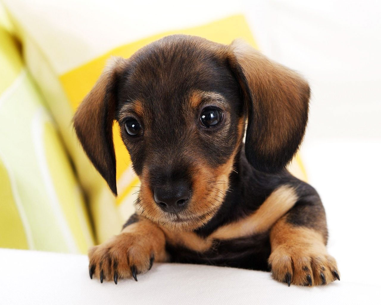 Small Dog Breeds Puppies