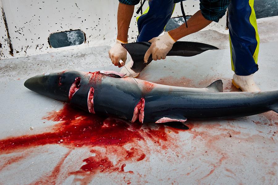 DIVER - votre avis sur Ulta Personnal Diver David_Vogt-NZ-110305-446-shark_finning_on_tuna_longliner_900