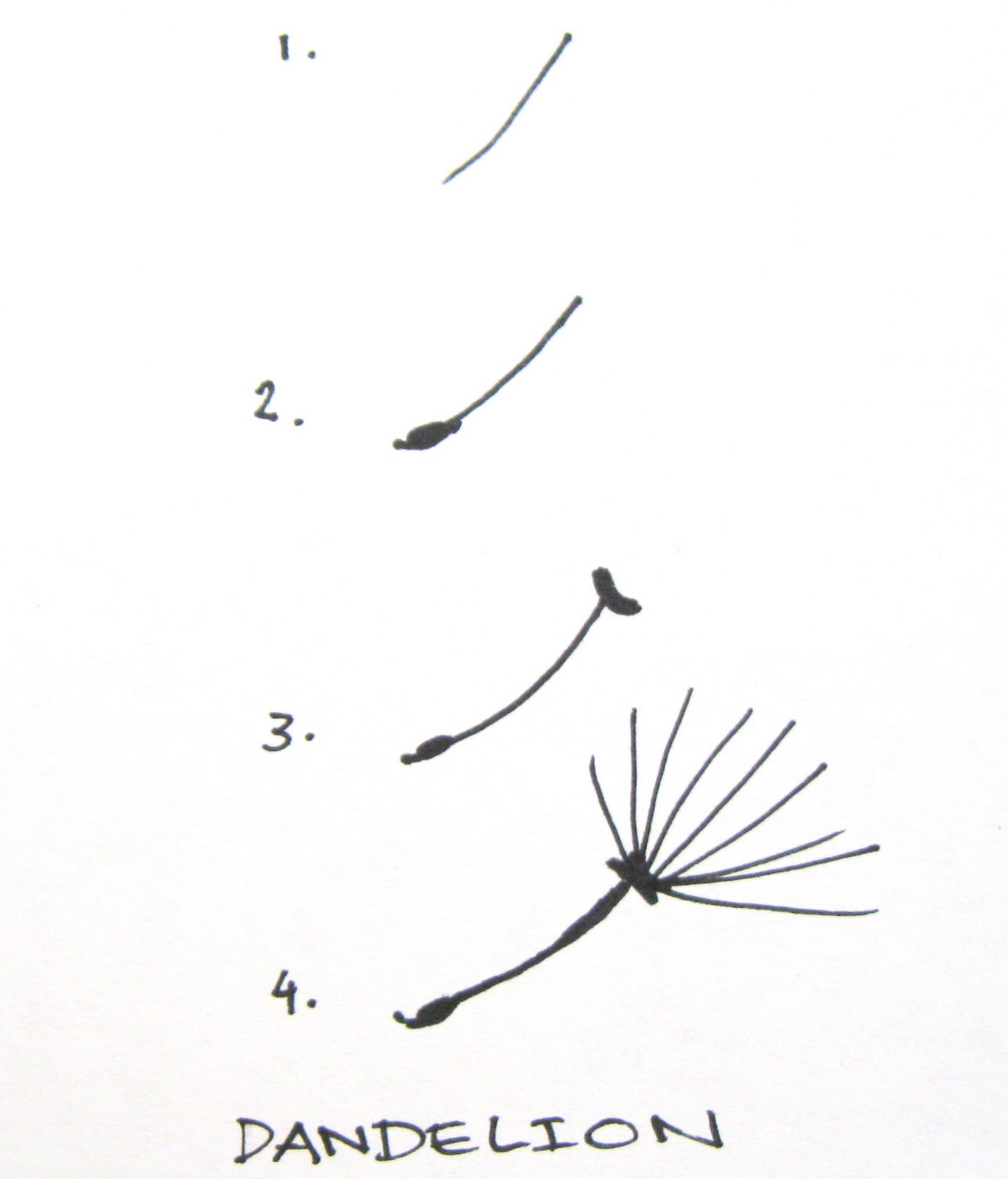 How to draw a dandelion male models picture for How to draw a dandelion step by step