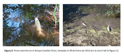 Peces muertos en el arroyo Canelón Chico - Contaminación en Aguas Corrientes