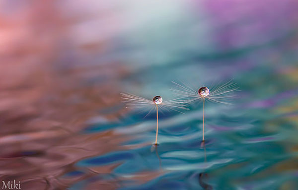 Photos by Miki Asai