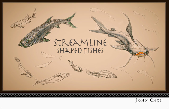 Fish Shape Designs John Choi Sketchworks