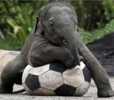 Funny-elephant-football