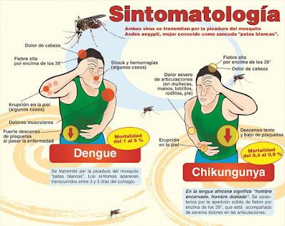 Sintomas del Chikungunya