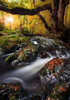 Parque Forestal de Tollymore