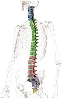 Informatii medicale despre tuberculoza coloanei vertebrale