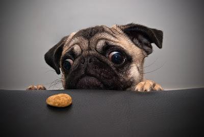 cachorro com biscoito
