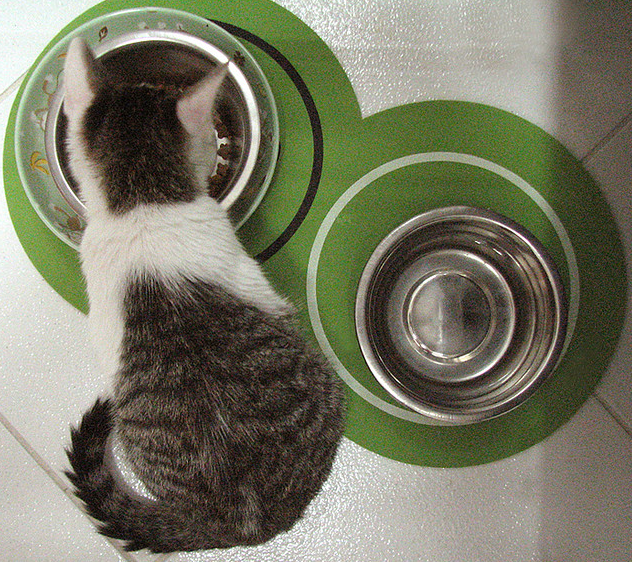 stainless steel bowls are sold almost everywhere stainless steal cat food bowls are dishwasher safe and sturdy however there are some minuses to consider