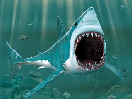 foto ikan hiu