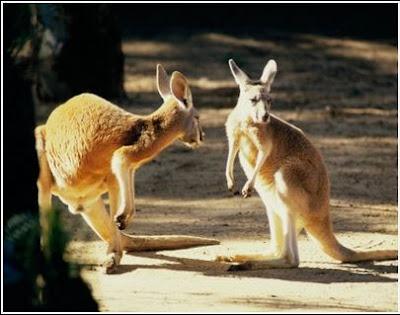http://www.biopedia.com/mamiferos/