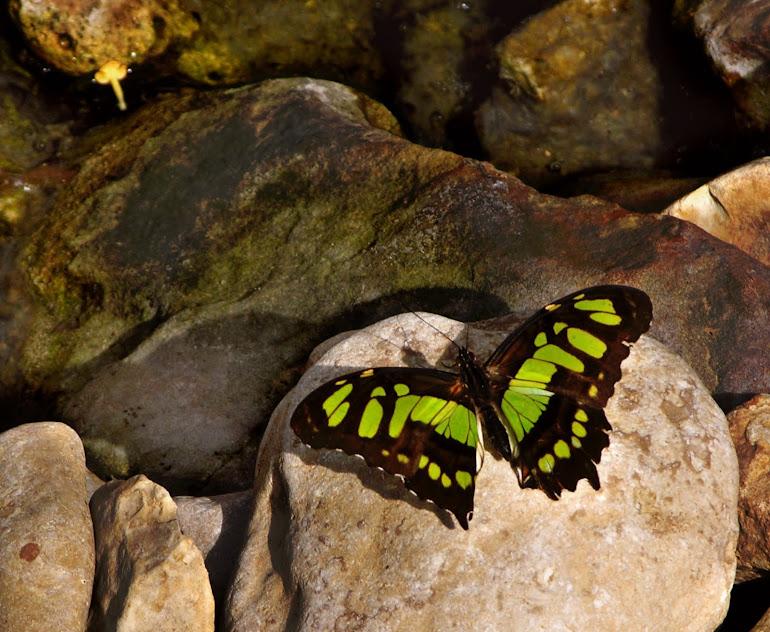 Butterflies Rock!