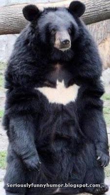 Black bear with batman sign on chest