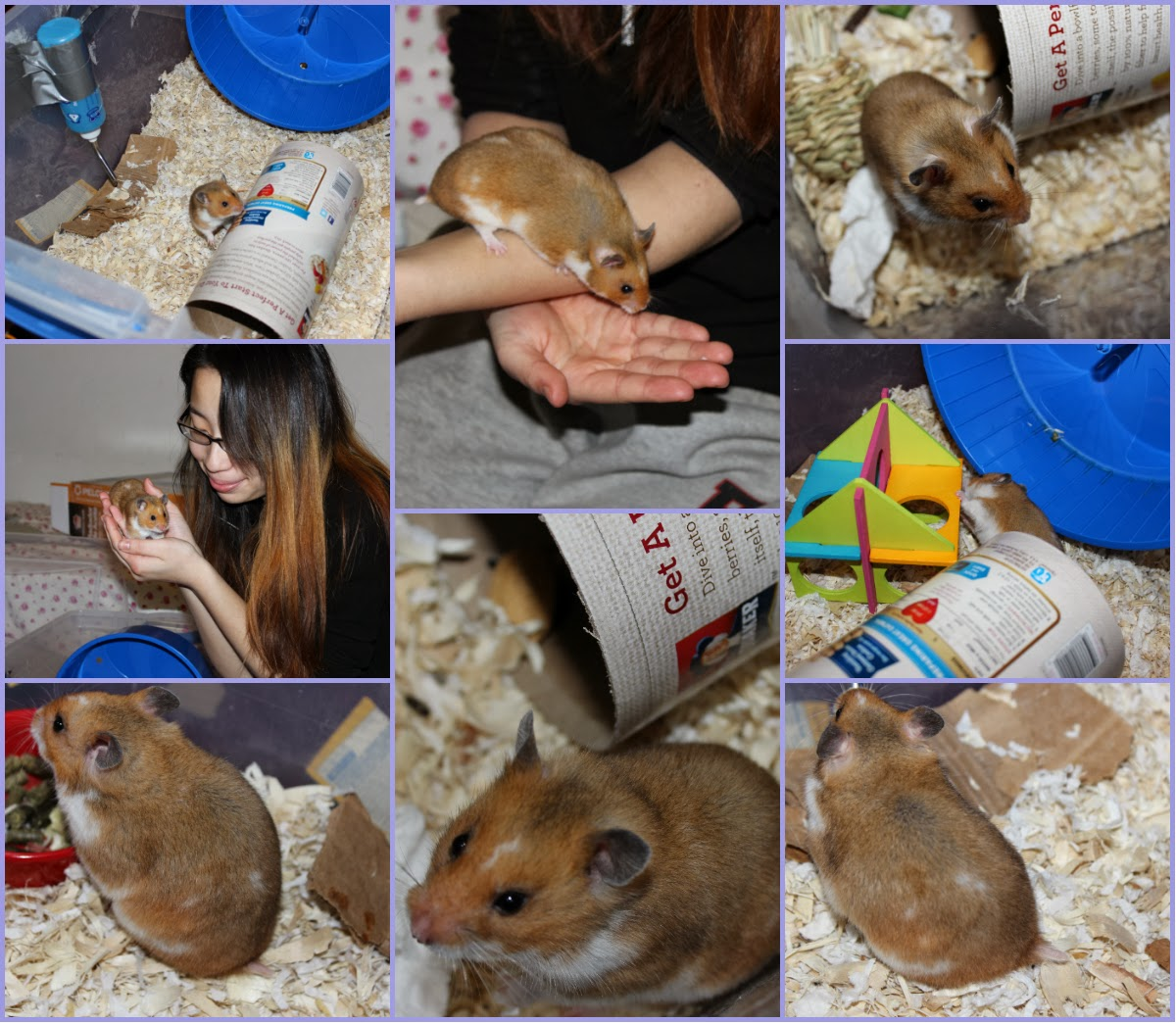Hamster Pictures 2014