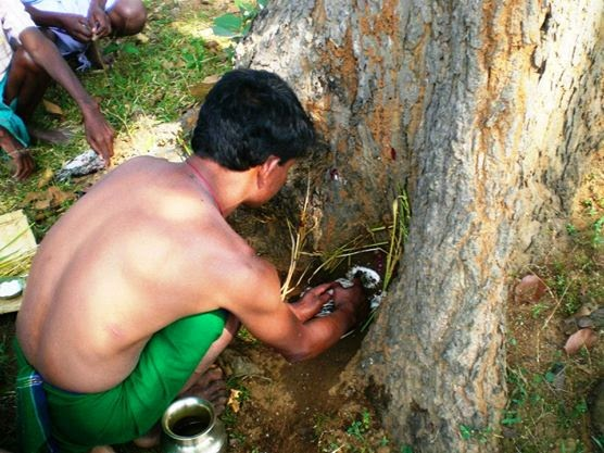 Janthar bonga santal worships when paddy get ripen