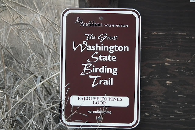 Little Hawks & Birding Trails