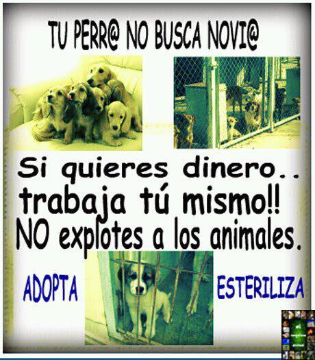 stop venta animales