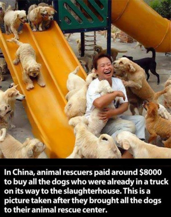 People doing amazing things for animals (28 pics), animal rescuers in china rescued dogs who were already in a truck on its way to the slaughterhouse