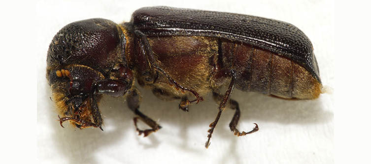 Boletín Sociedad Andaluza de Entomología Vol. 21