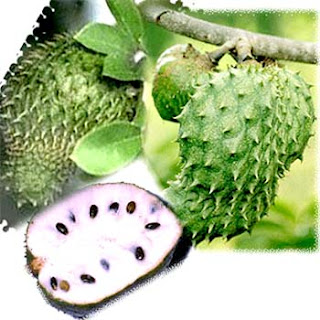 soursop picture