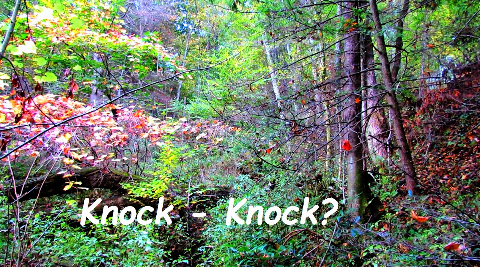Mysterious Knocking on Wood Sounds from the Deep Forest of the Great Smokey Mountains!