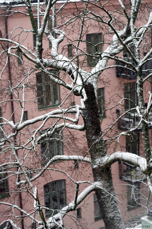 aliciasivert, alicia sivertsson, snö, snow, winter, vinter, tree, träd