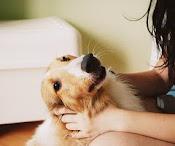 El mejor amigo del hombre , el que nunca te traicionará..