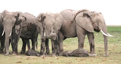 Elefantes duermen