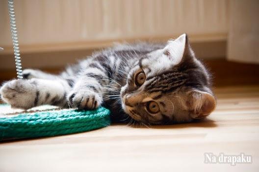 Miłość do kotów od urodzenia