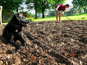 gardening with dogs