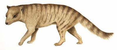 Australia prehistorica Nimbacinus