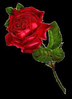 rose digital clip art