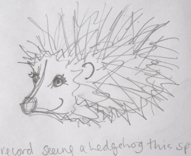 Line Drawing Hedgehog : In there s no place for hedgehogs when forecasting tuffias