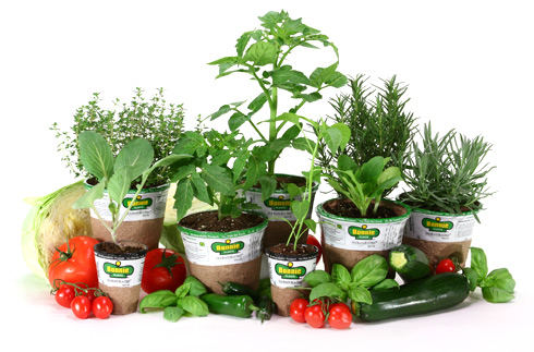 http://2.bp.blogspot.com/-PoqebtOoFsA/T5QZbubye6I/AAAAAAAADCs/_edJaukTeug/s640/Lowes-Herbs-Vegetable-Plants-Earth-Day.jpg