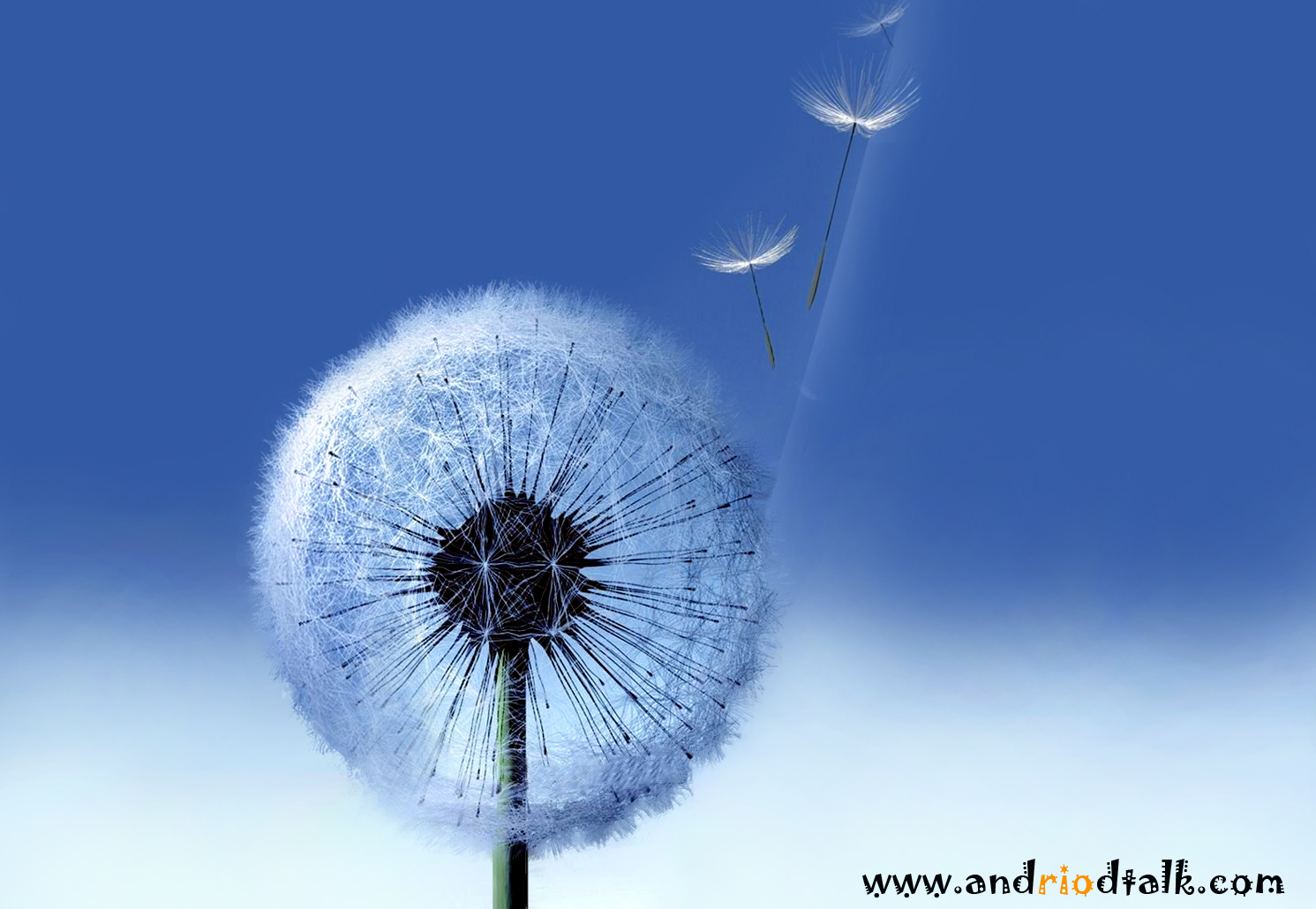 http://2.bp.blogspot.com/-PotGygMr3eU/UQsHyjNkxiI/AAAAAAAABYQ/UVDh1pyyZkQ/s1600/HD-+galaxy-s3-Dandelion+wallpaper+for+PC+desktop+wallpaper.jpg