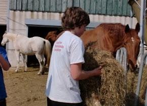 Futterzeit für Pferde
