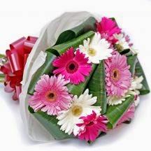 Gerbera Festival flower