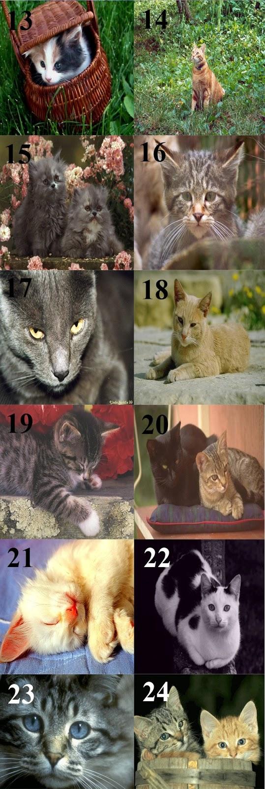 Download Gambar Kucing Lucu Imut 13-24