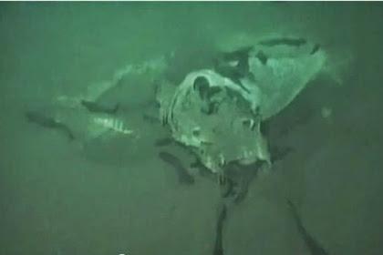 Misteri Kuburan Bawah Laut Tempat Ikan Raksasa Mati