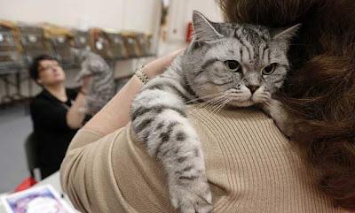 foto kucing manis
