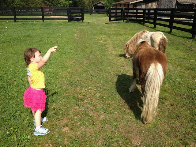little girl with 2 ponies