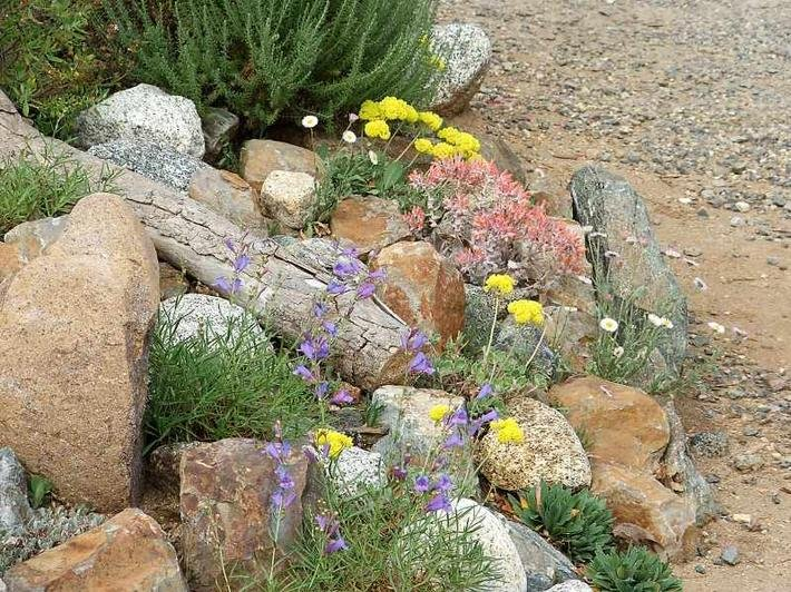 Ca native garden native plant guides for Landscaping rocks and plants
