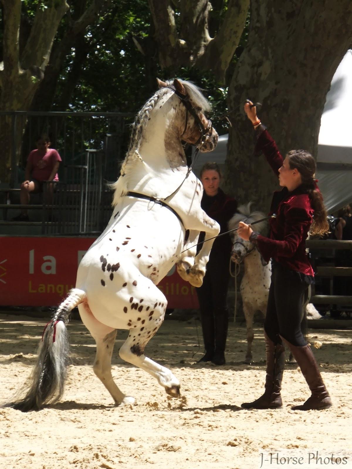 Rencontres equestres mediterraneennes de beaucaire