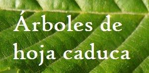 ÁRBOLES DE HOJA CADUCA