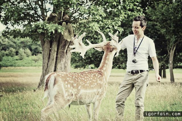 deer London uk richmond park fun igor fain dears