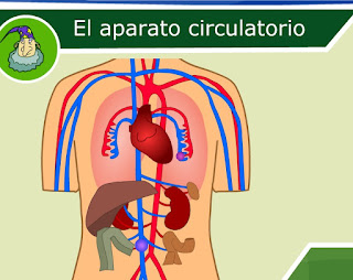 http://ares.cnice.mec.es/ciengehi/b/00/animaciones/a_fb05_03.html