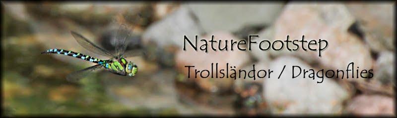 NatureFootstep Trollsländor / Dragonflies