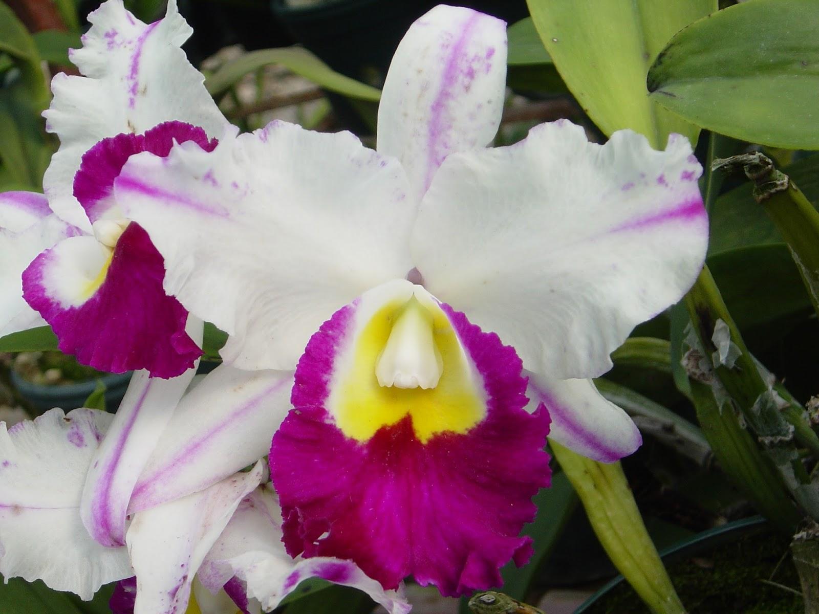 Imagenes de orquideas