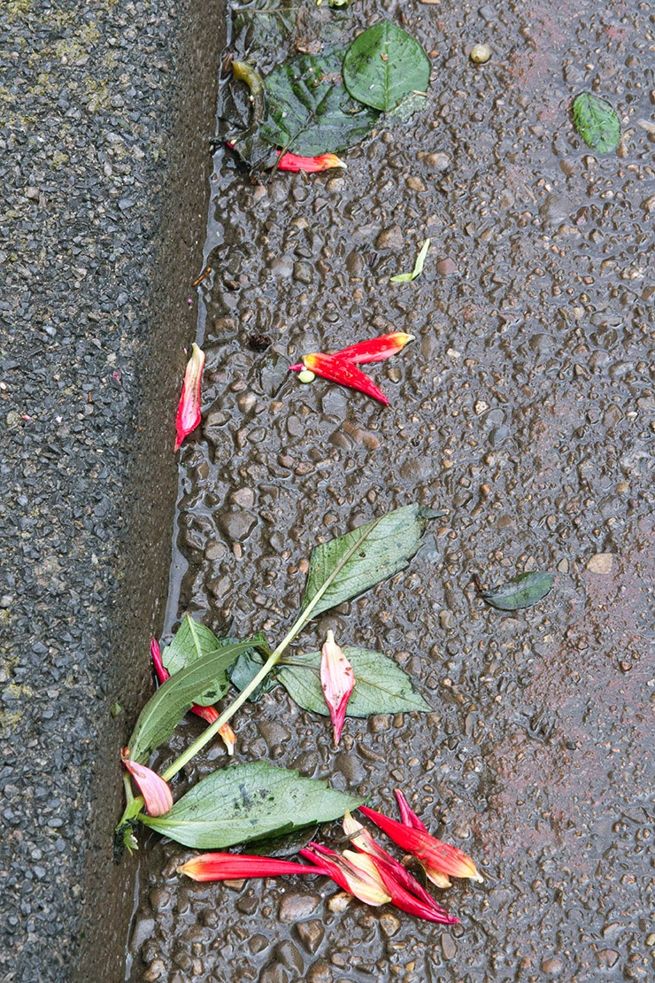 red flowers in the gutter